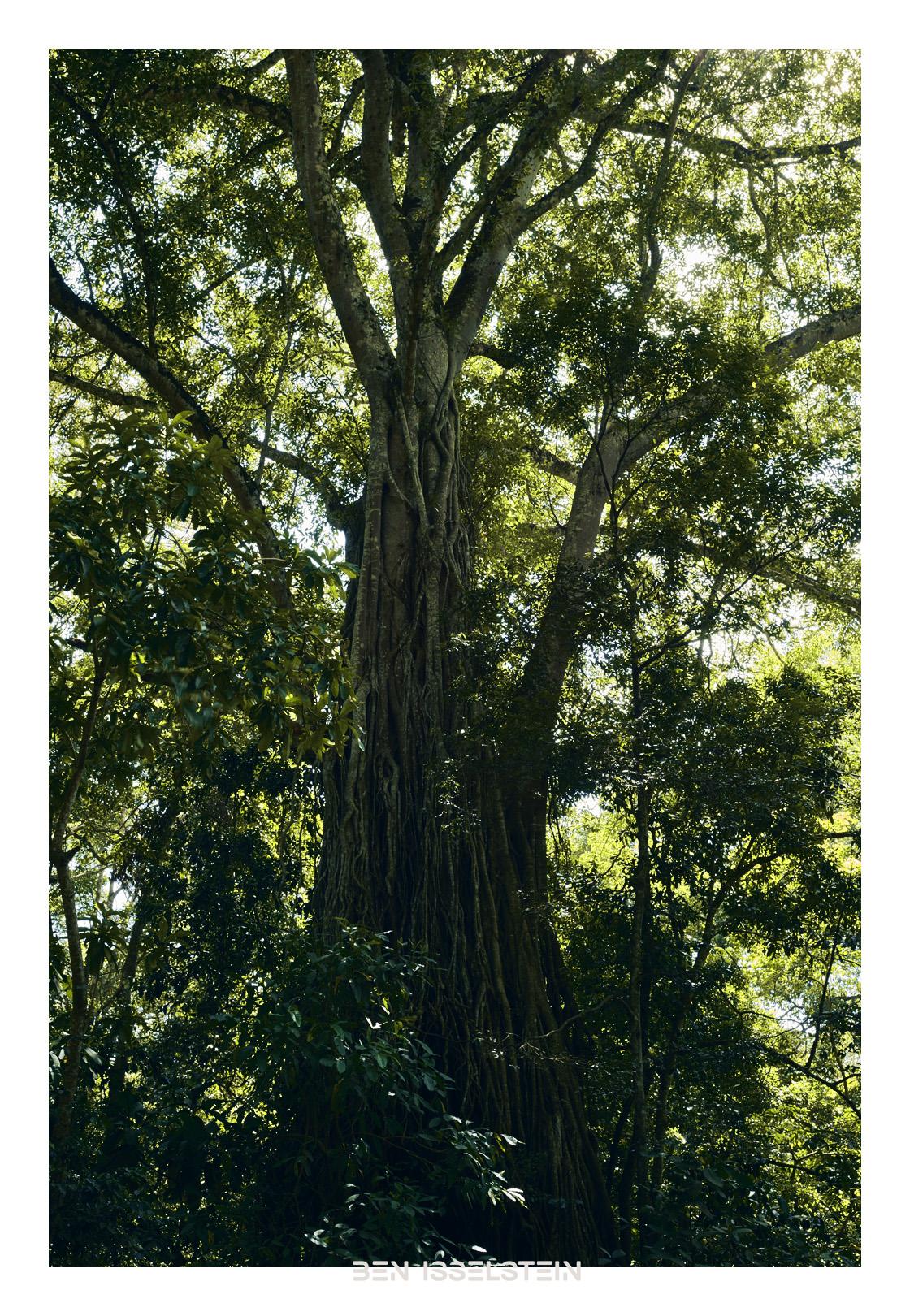 Professionelle Fotografie Aachen Baum Tansania