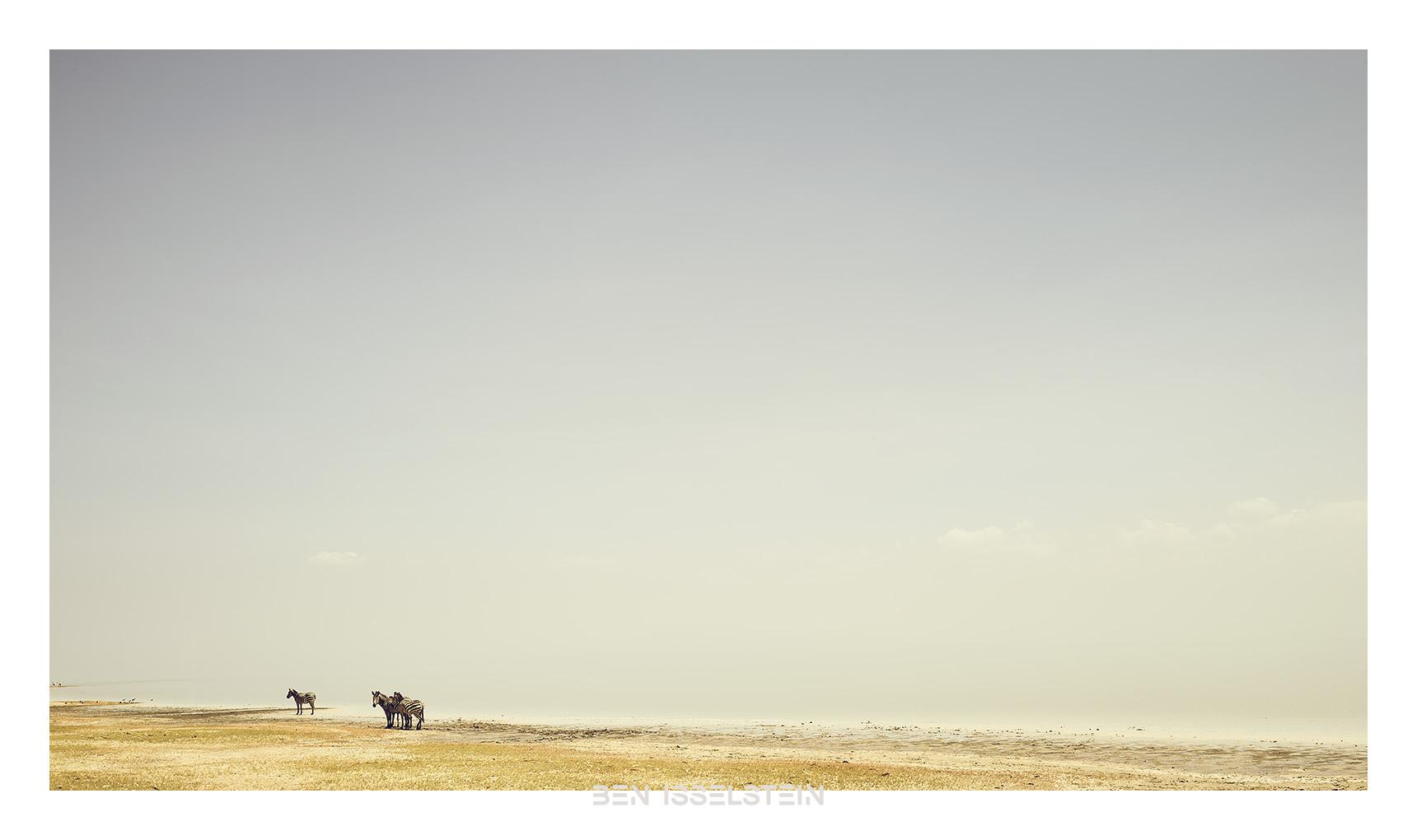 Professionelle Fotografie Aachen Zebras Tansania